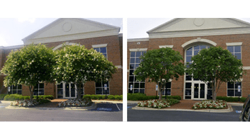 casey tree service experts commercial pruning