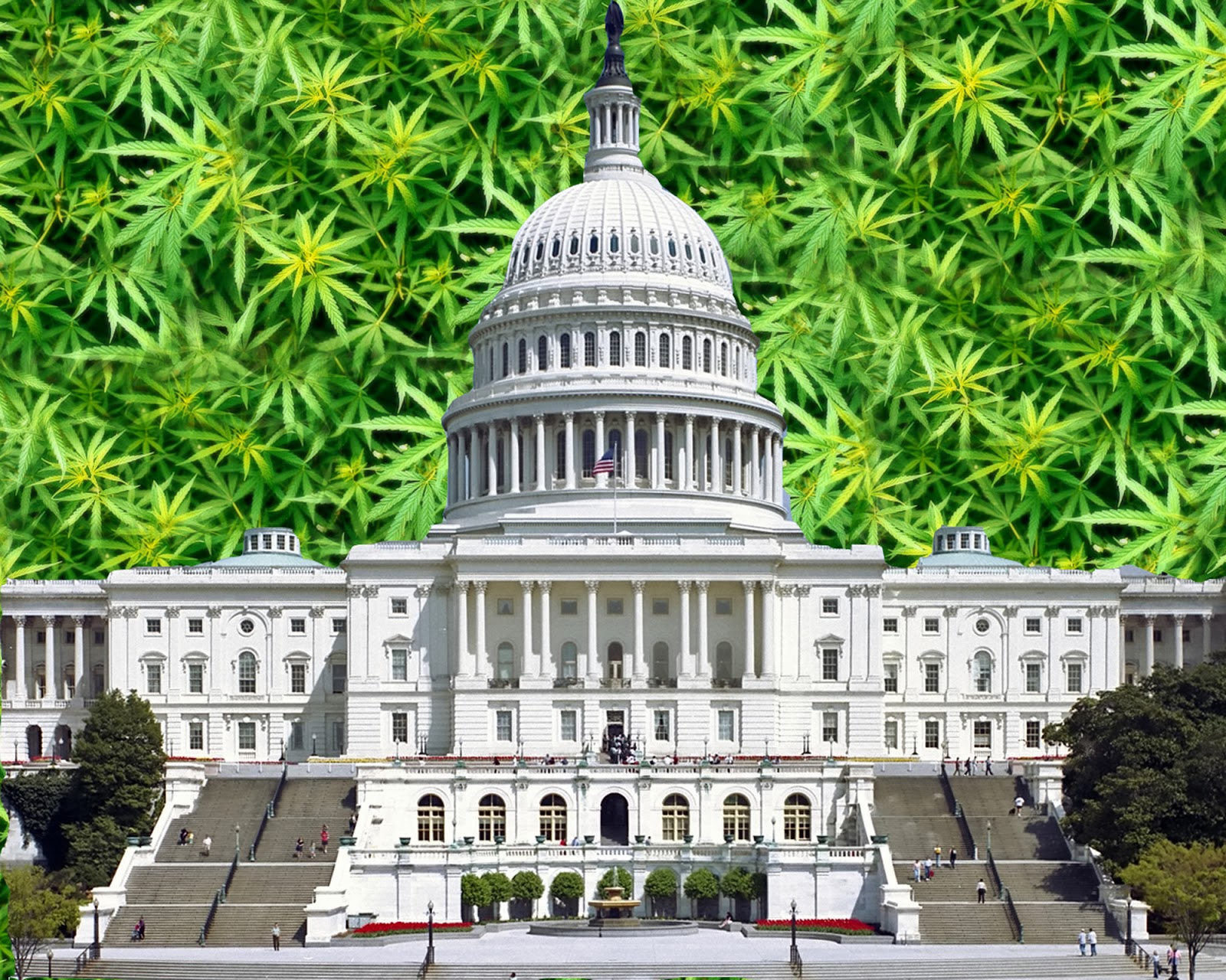 The Cannabis and Hemp Industries Are Fighting Back with Help From Congress