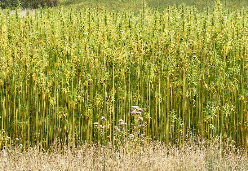 The Indiana State House Sign Bill to Allow Farmers to Grow Industrial Hemp