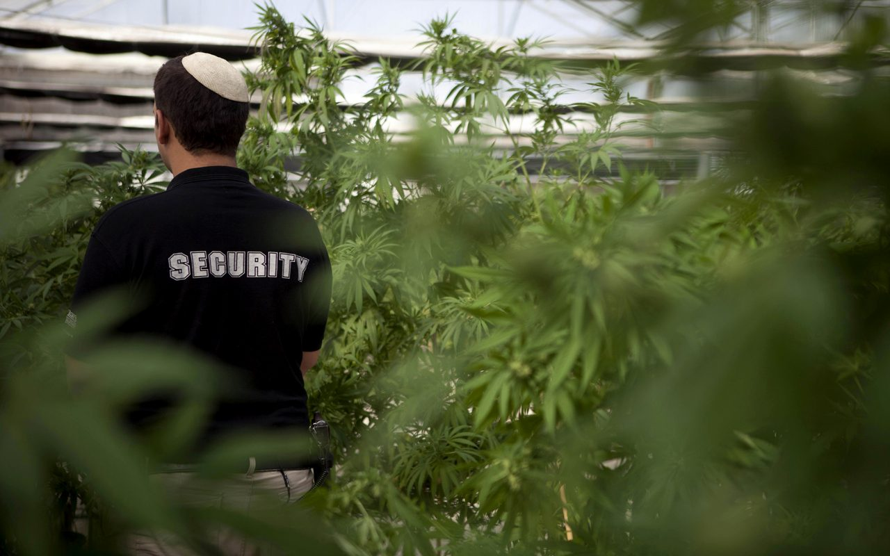 Israeli Cannabis Industry Enters Legal Battle to Allow Exports