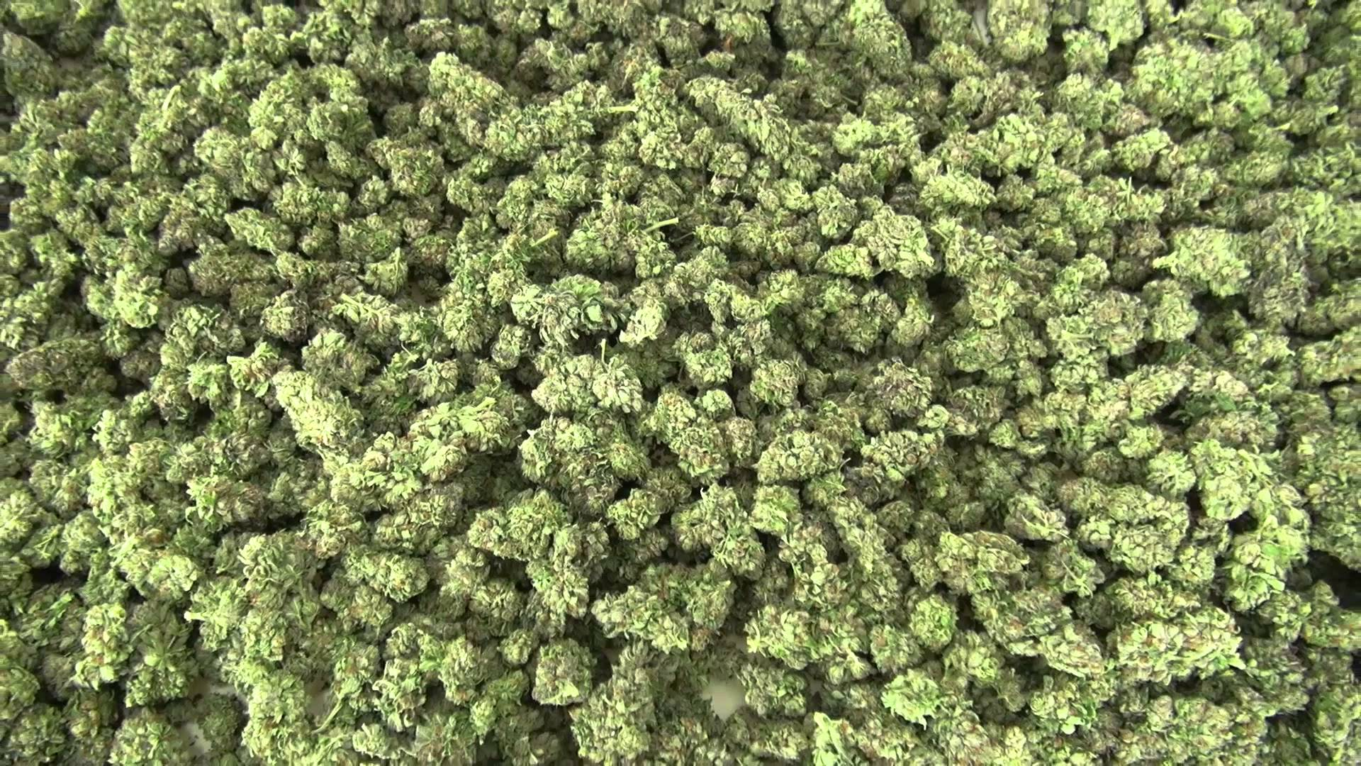 Six Major Cannabis Producers Set to Provide 74,000kg of Cannabis into Quebec