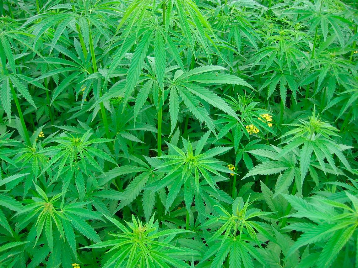 Building a Portfolio of Industrial Hemp Companies is Key to the Future of Global Hemp Group, Inc.