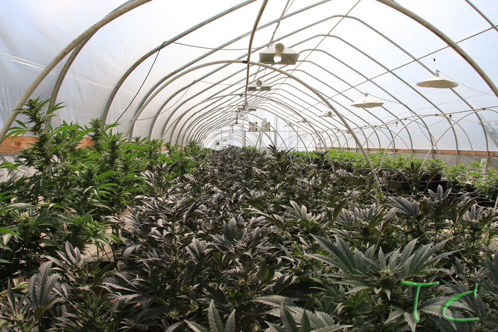 Marijuana Company of America's Joint Venture Completes Set-Up of 7,000 sq. ft. Greenhouse Facility in Washington State