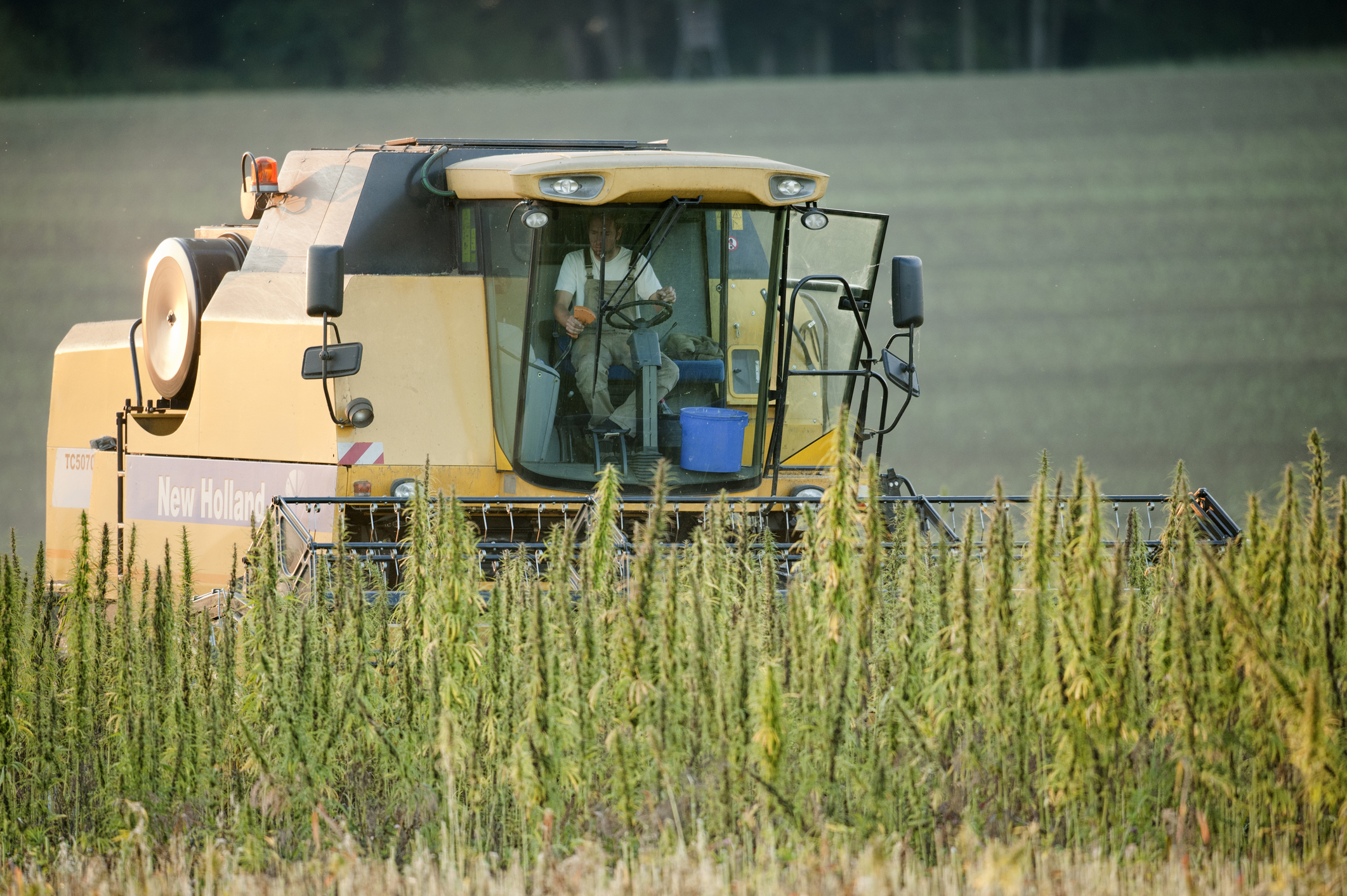 Global Hemp Group and Marijuana Company of America Form Joint Venture to Cultivate High Yielding CBD Hemp in Scio, Oregon