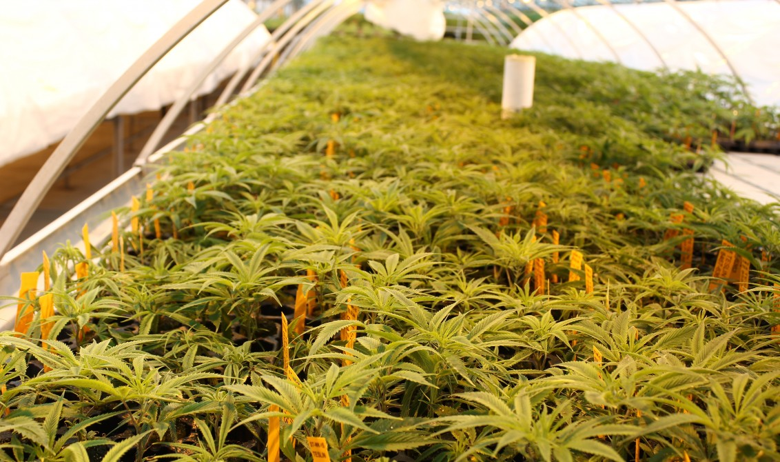 Liberty Health Sciences to Expand Cultivation Capacity at Their 360 Innovation Campus
