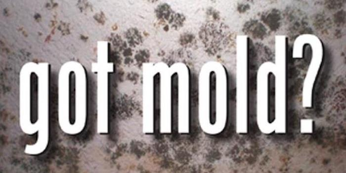 Mold is a four letter word