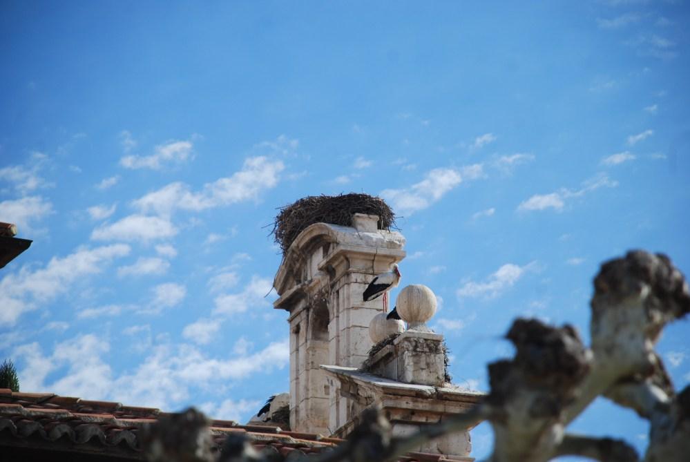 Cigüeñas de Alcalá de Henares (1/6)