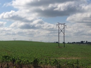 Driving by the triangle field at the Waldo farm, I notice that the wheat stubble is disappearing under a canopy of beautiful DCB.