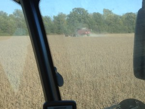 This is the last strip of soybeans on the Huey Flat R field.  They disappeared into the combines at about 5 pm.