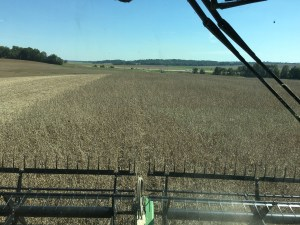 Returning to soybean on Tuesday afternoon was a pleasure.
