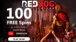 Red Dog Casino 100 FREE Achilles Deluxe Spins New RTG Game Special Deposit Bonus