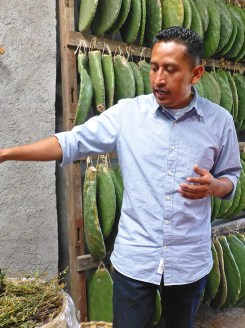 Porfirio Gutiérrez, with paddles of nopal cactus housing cochineal from which the dye carmine is derived. He designs, weaves, promotes, educates, demonstrates