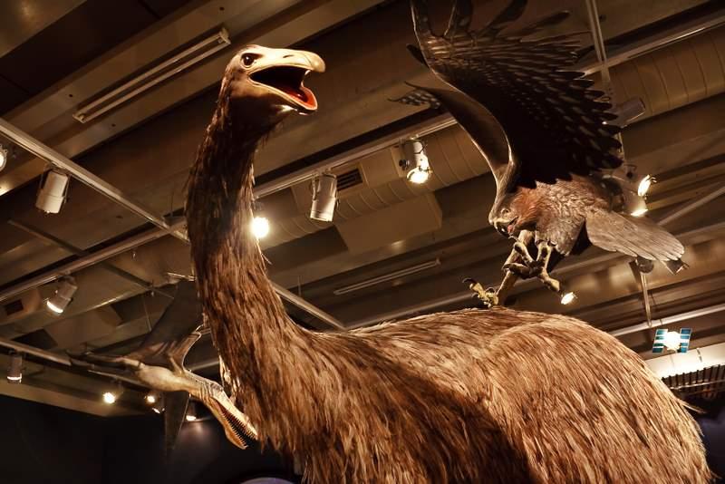 Moa_and_eagle_at_Museum_of_New_Zealand_Te_Papa_Tongarewa-5May2009