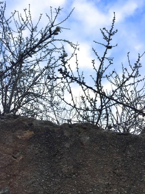 Mandelblüte Santanyi