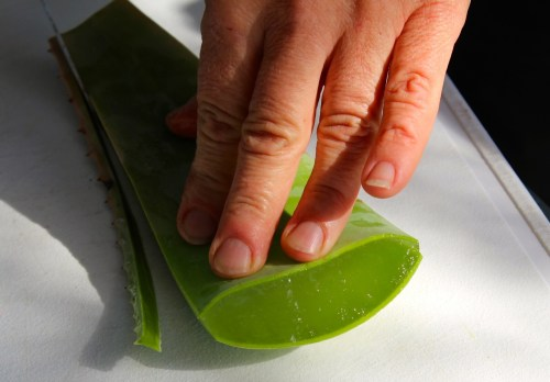Ränder Aloe
