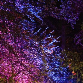 Auch Bäume im Park wurden in Szene gesetzt. (© casowi)
