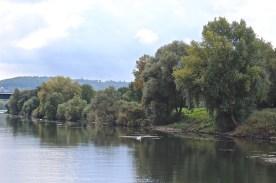 ... das Grün der Uferpflanzen und Bäume ... (© casowi)