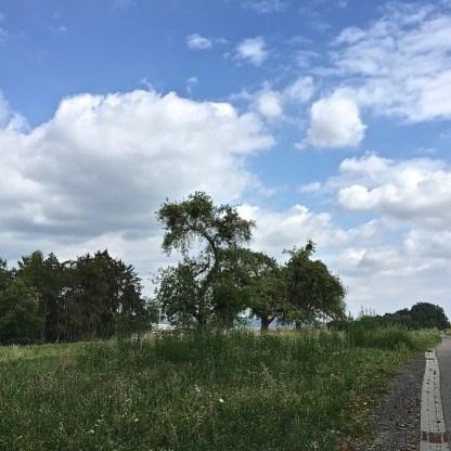 Obstbäume entlang des Goethewegs (© casowi)