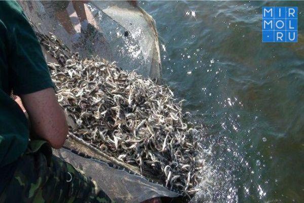 Улов рыбы в Дагестане вырос в пять раз за 4 месяца текущего года
