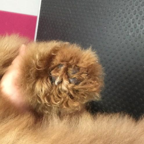 Untidy puppy foot
