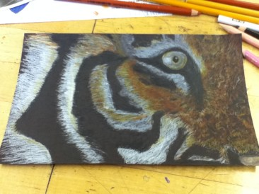 Colored Pencil- Eye of the Tiger Thumbnail