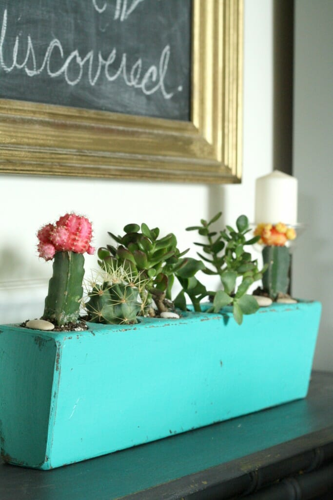 upcycled succulent and cacti planter