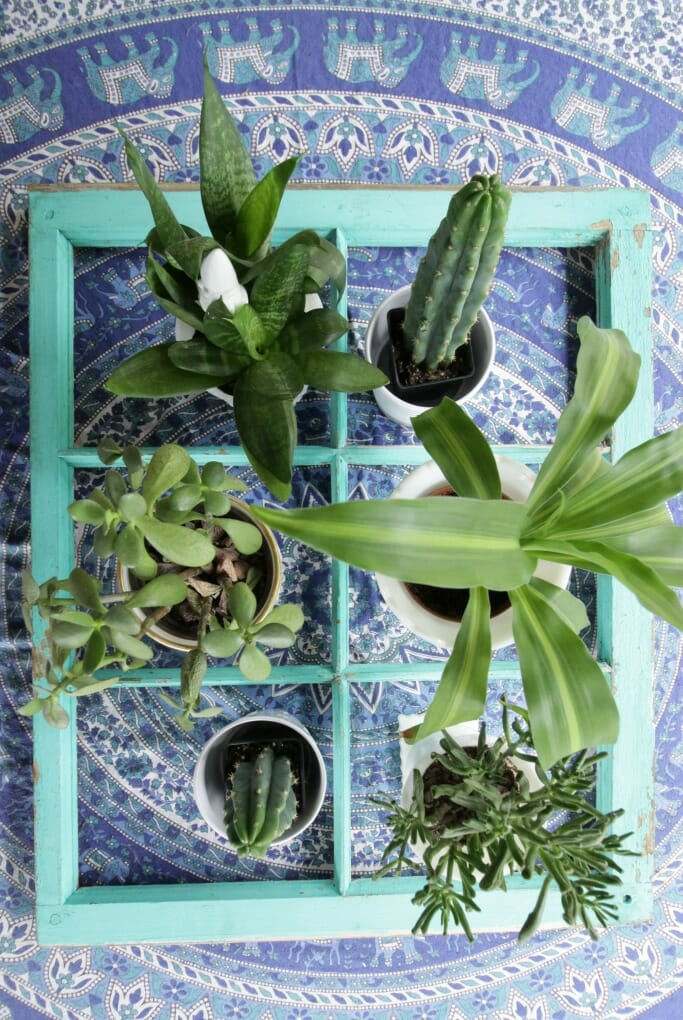 Window on table with plants in spaces
