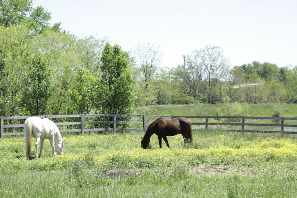 Horses at Sweet Clover Barn
