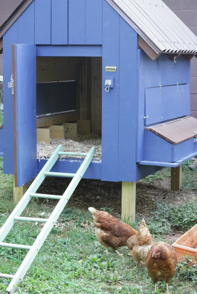 Hens at coop