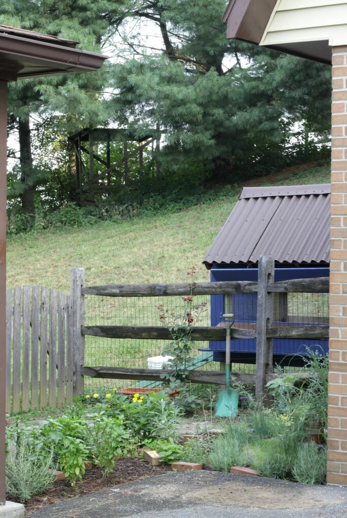 Chicken Coop behind herb garden