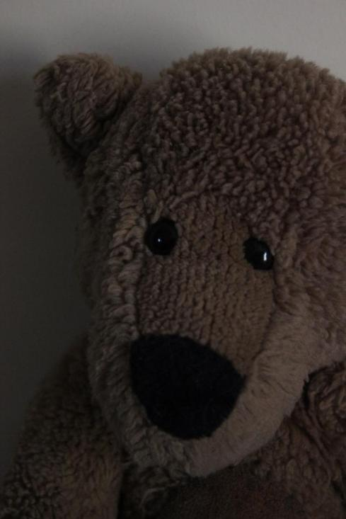 Andy Greenare teddy bear photograph for the inspiration challenge in october 2013