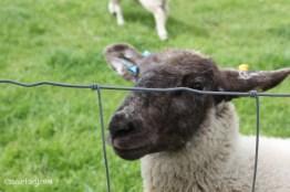 Jimmy Doherty Farm in Suffolk-19