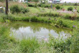 Jimmy Doherty Farm in Suffolk-21