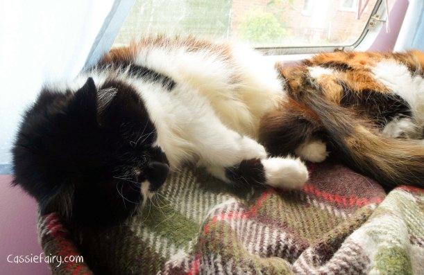 cats can sleep anywhere - wheres the weirdest place you can sleep-2