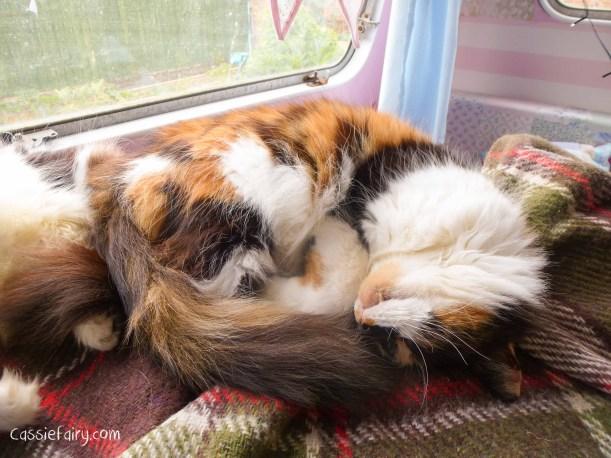 cats can sleep anywhere - wheres the weirdest place youve slept