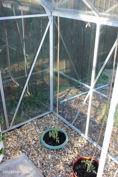 greenhouse spring makeover veggie patch-20
