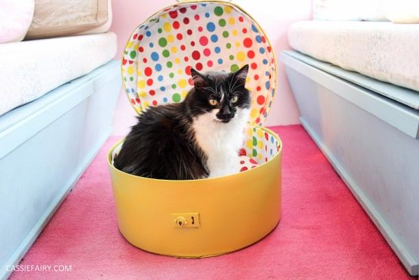 diy cat hat box - suitcase bed for pets-24