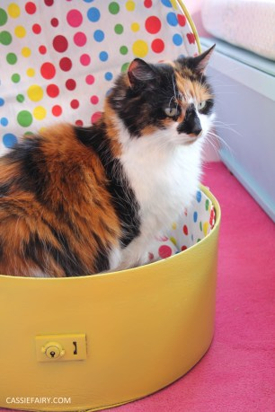 diy cat hat box - suitcase bed for pets-27