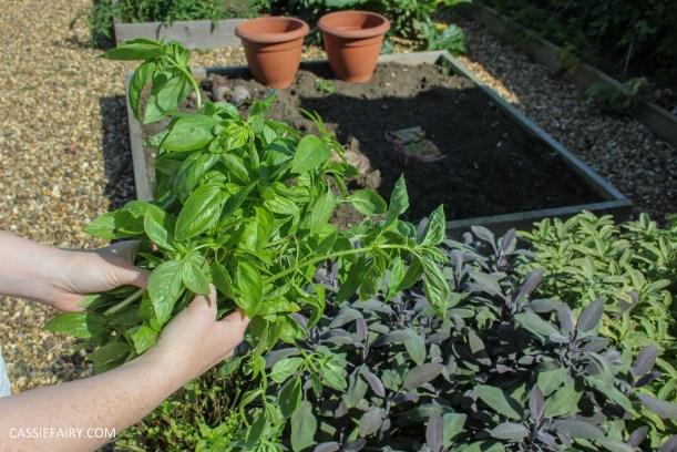 pieday friday diy homemade pesto basic recipe garden produce veggie patch meal dinner