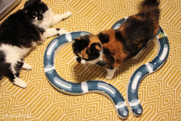 cat toys exercise pet health-10
