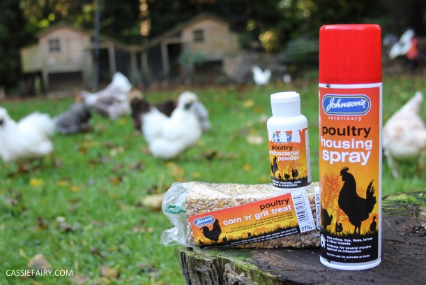 chicken poultry pet health tips products-2