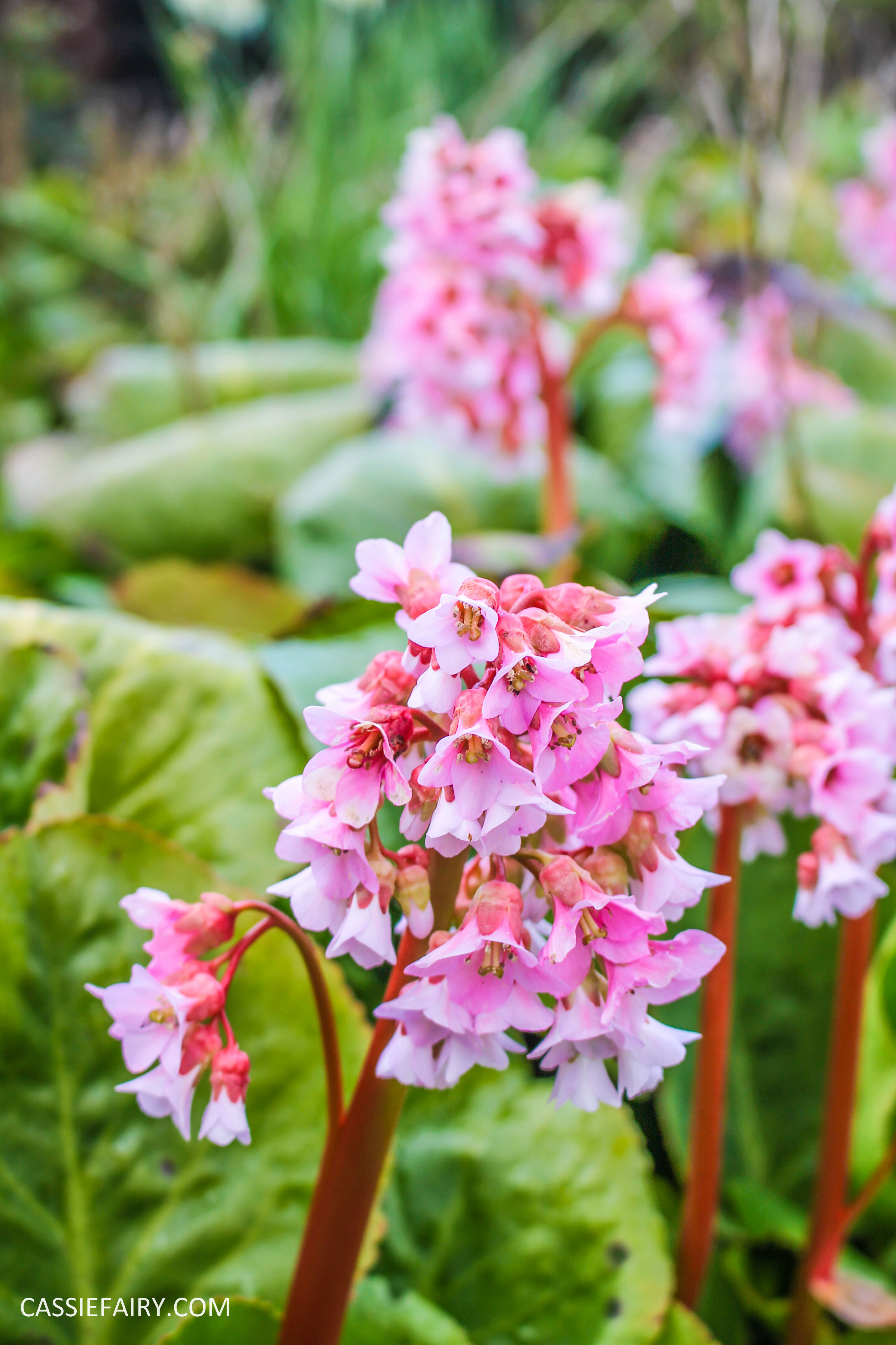 day out wild flower walk spring-24
