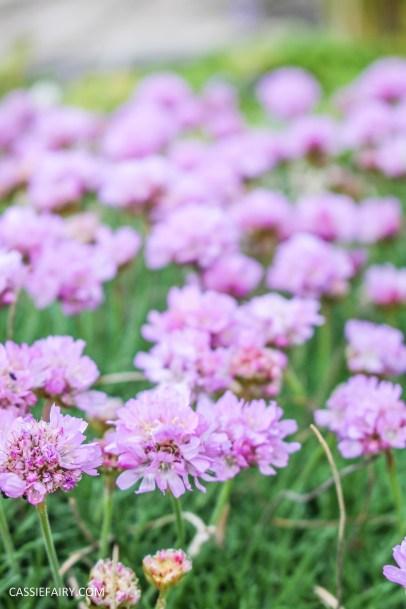 day out wild flower walk spring-25