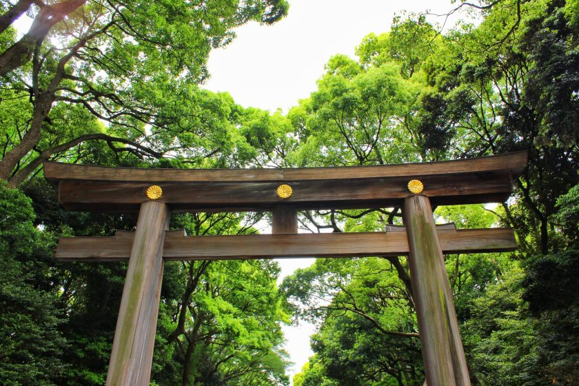 tokyo itinerary Day One in Tokyo! Harajuku, Shibuya, Shinjuku -meiji jingu shrine