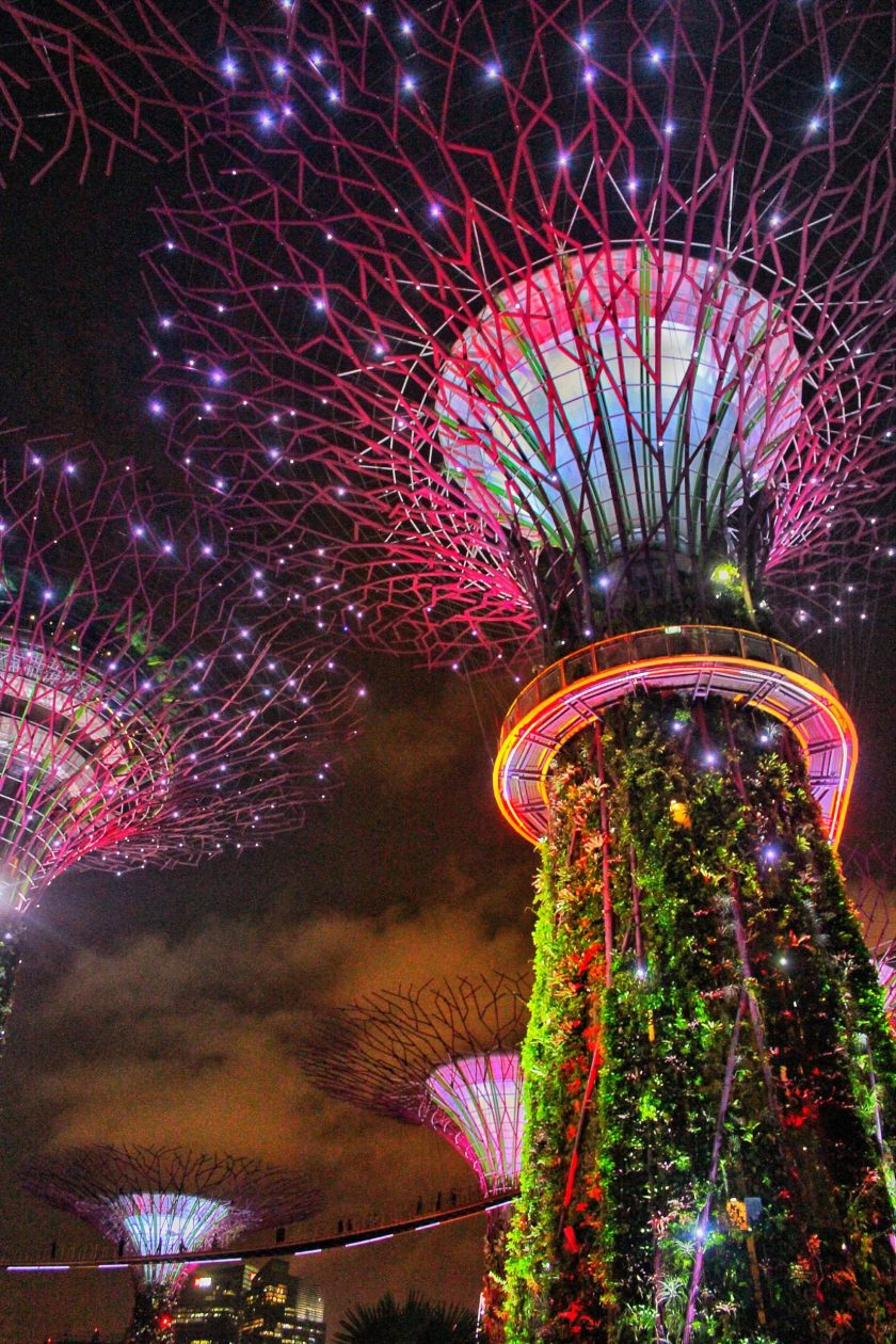 supertree grove singapore on a budget