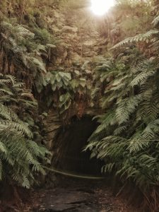 Things to do in Wollemi National Park - glowworm tunnel