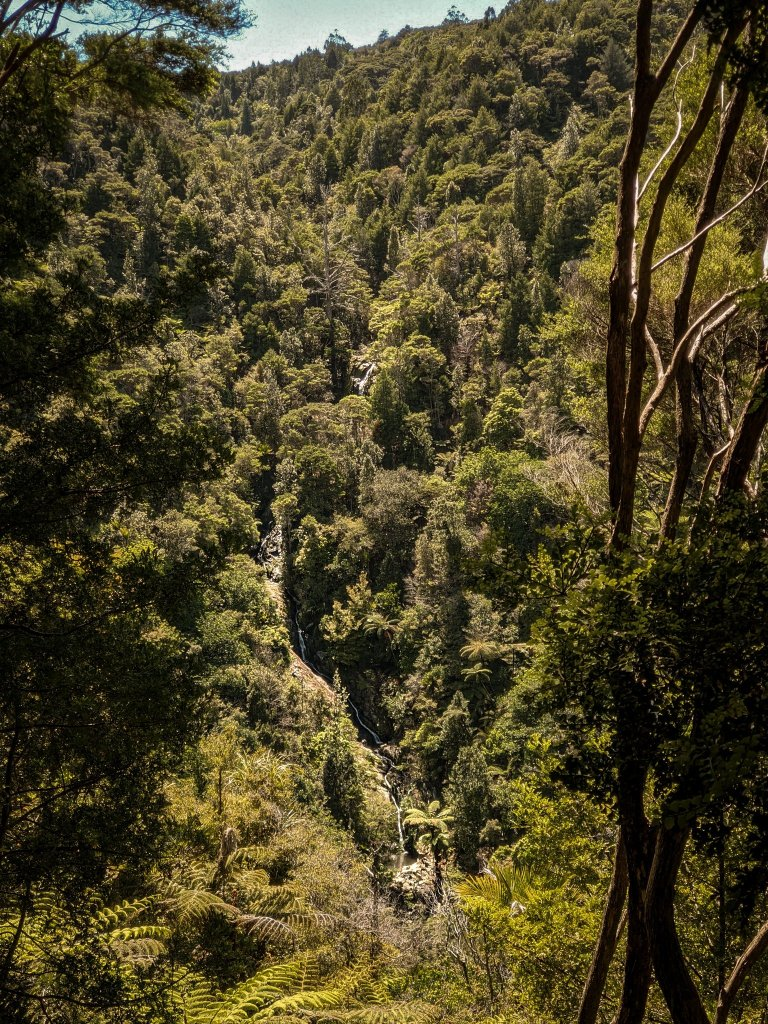 Tanakaha Falls Track, Mangawhai
