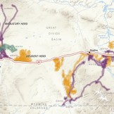Migration Routes and Interstate 80. Atlas of Migration: Wyoming's Ungulates, in production.
