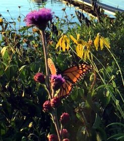 """""""What the caterpillar calls the end of the world the master calls a butterfly."""" - R Richard Bach"""