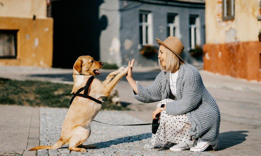Els gossos senten emocions comparables a les d'un nen